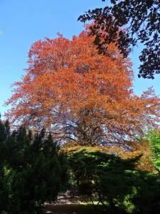 ADSC08405_drzewa